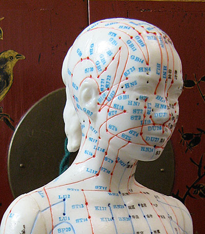 Acupuncture manequin showing ponts on the head, neck and upper chest