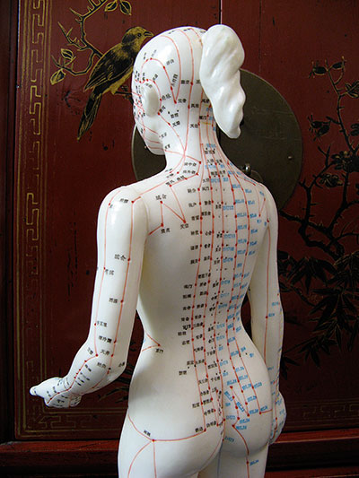 Acupuncture female manequin showing ponts on the back of the body