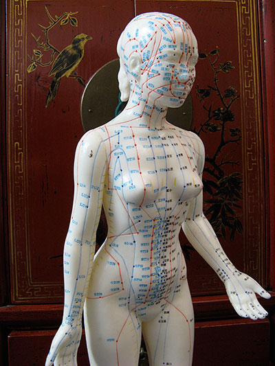 Acupuncture female manequin showing ponts on the front of the body